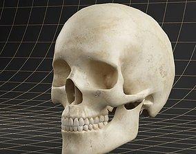 3D Anatomy skull 01