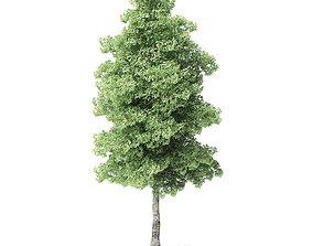 Red Alder Tree 3D Model 7m