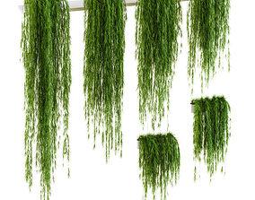 3D Hanging plants for shelves 6 models