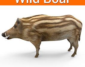 Wild Boar 3D model realtime