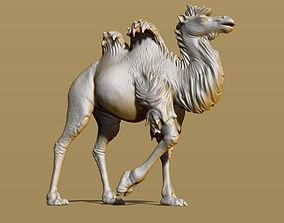 Shaggy camel 3D print model