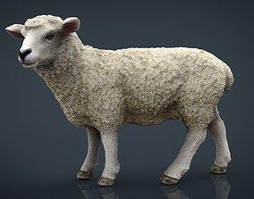 3D model Sheep 2