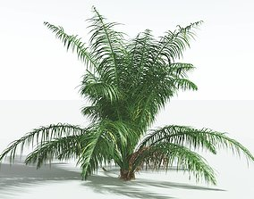 EVERYPlant Seashore Palm SINGLE --1 Model-- 3D