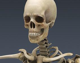 3D model Male Skeleton
