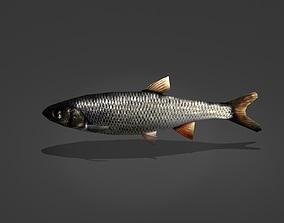 3D asset Whitefish