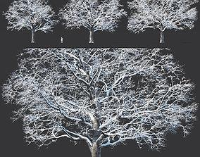 leaf 3D Common oak winter Nr5 H16-19m Three tree set