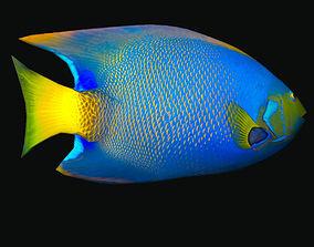3D model Queen Angelfish