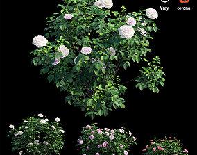 3D Rose plant set 56