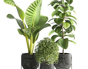 Indoor plant 14 3D asset