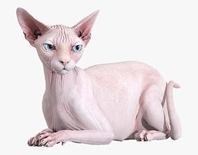 model 3D Sphynx Cat Pink Rigged