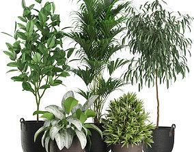 3D model Plants collection 465