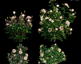 3D Plant rose set 09