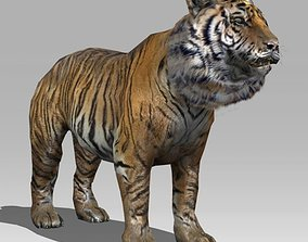 animated Tiger 3D Model