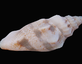 Juvenile Conch Sea Shell 3D model