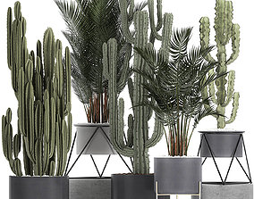 collection of decorative cactus in black flowerpots 746 3D