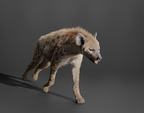 Spotted Hyena 3D model