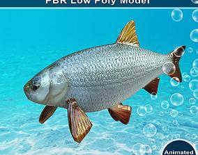 3D asset Ide Fish Animated Model