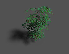low poly forest tree 1 3D asset