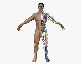 Human Male Full Body Anatomy 3D