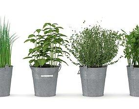 3D model Herbs