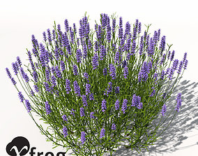 XfrogPlants Lavender 3D