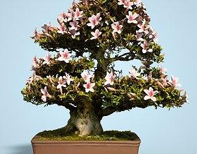 Satsuki Bonsai Tree Blossom 3D asset