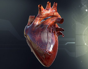 3D Human Heart Anatomy