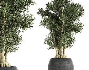 Decorative tree in a black flowerpots 3D model