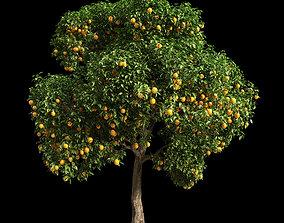 Orange Tree 15 3D