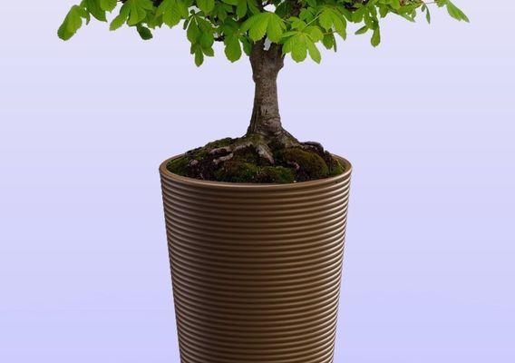 TerraCotta Bonsai Pot