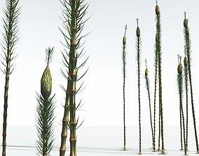 3D EVERYPlant Suckows Horsetail Tree 10 --16 Models--