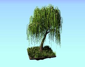 Willow tree 3D asset