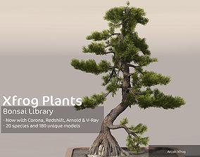 2020 XfrogPlants Bonsai Library 3D model maple