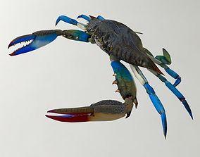 Crab 3D model Blue Crab other
