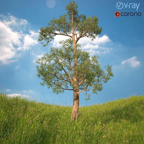 Tree 3d Model No 2