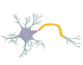 3D scientific Neuron