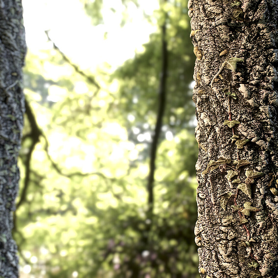 Tree Material