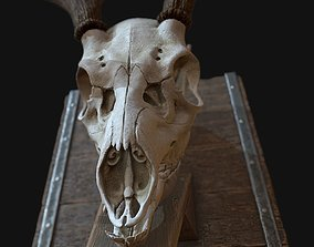 Deer Antler 3D asset