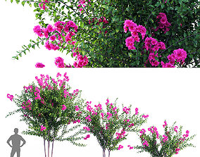 Purple lagerstroemia indica 3D model