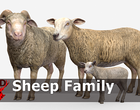 SHEEP FAMILY 3D model