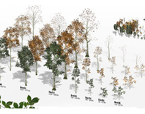 3D asset Beech Trees in 3 seasons