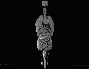 Male internal organs 3D print model