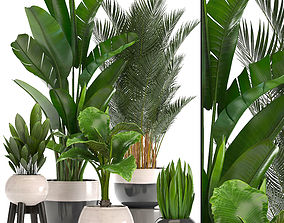 3D model Collection of ornamental plants in pots