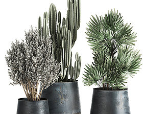 3D model Houseplants in a pot for the interior 870