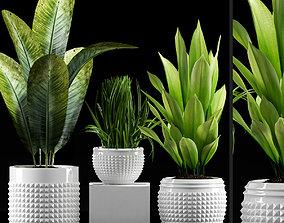 Plants 214 3D model