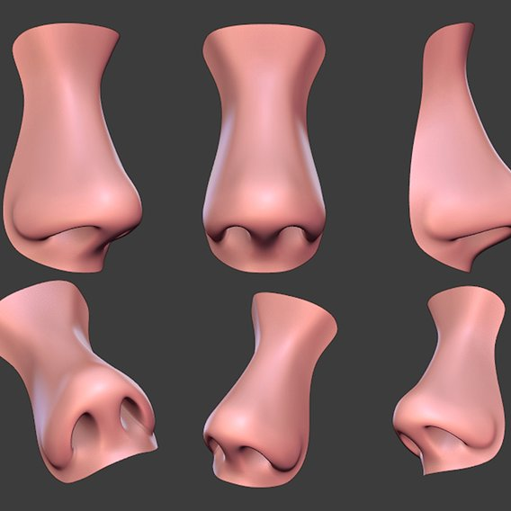 Human Female Nose