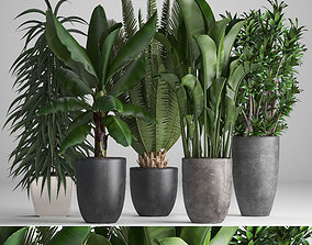 3D model Collection of ornamental plants in