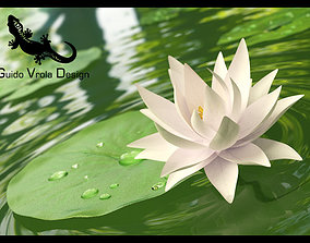 Water lily 3D