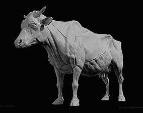3D print model Cow-Bovine Anatomy