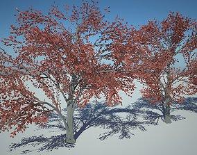 3D asset VR / AR ready Amelanhier Red tree purple tree